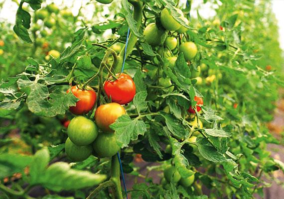 teaser_gross_landwirtschaft
