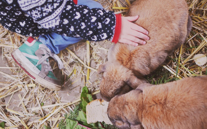 Im Kinderbauernhof