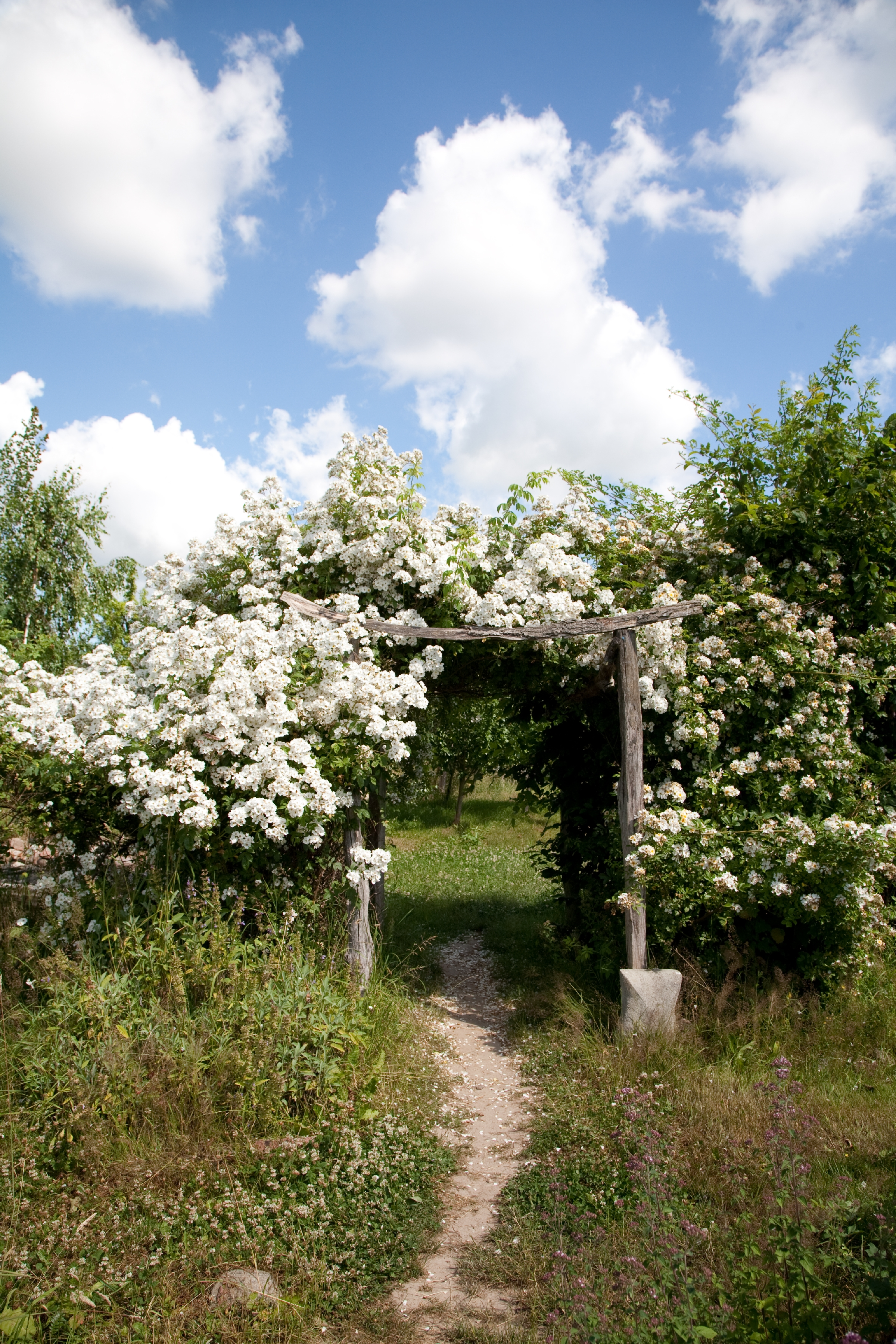 Kräuter- und Rosengarten